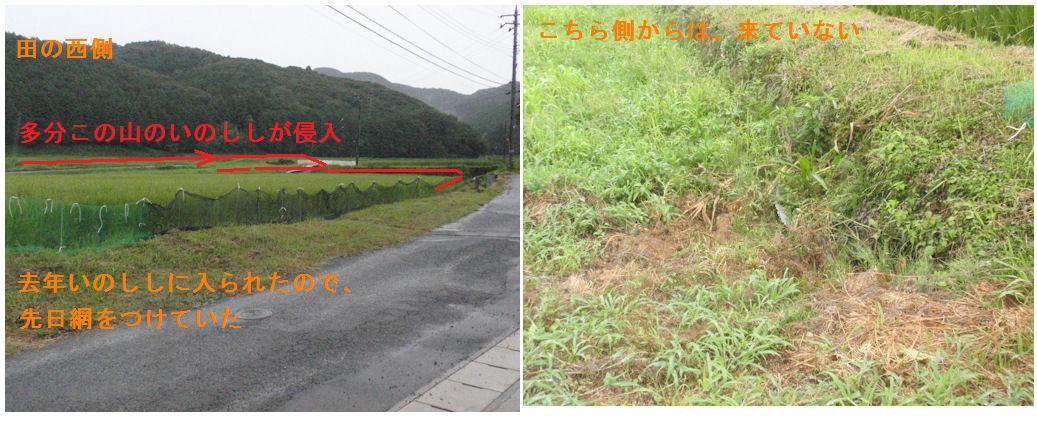 f:id:chuumeikun:20190806120444j:plain
