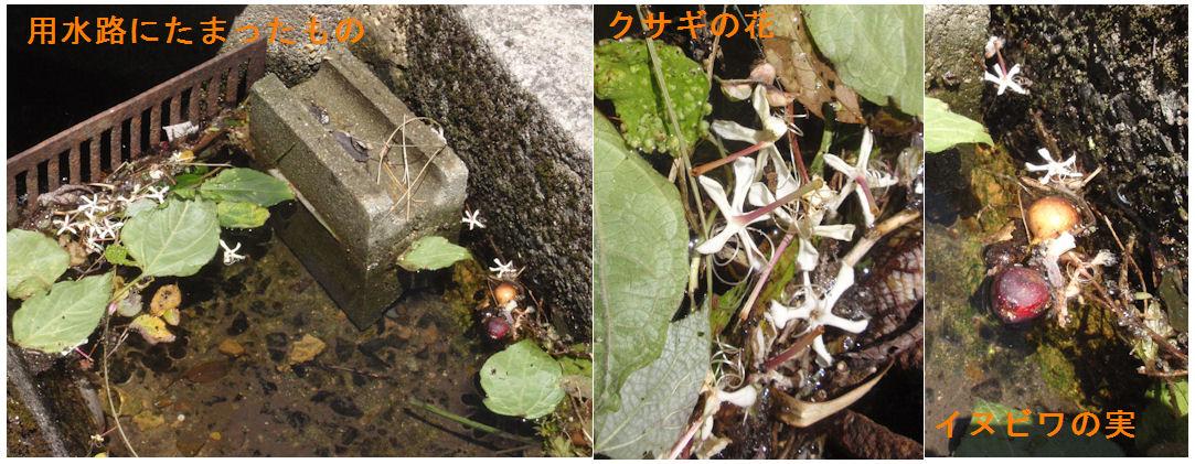 f:id:chuumeikun:20190811033414j:plain
