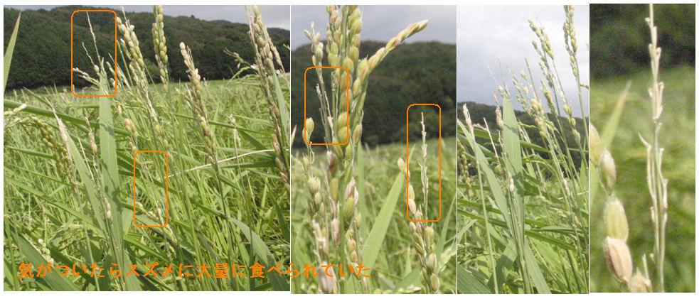f:id:chuumeikun:20190816202903j:plain