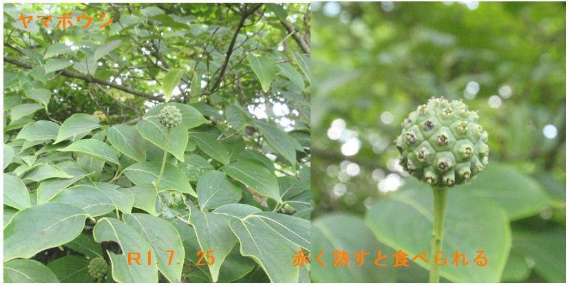 f:id:chuumeikun:20190911004130j:plain