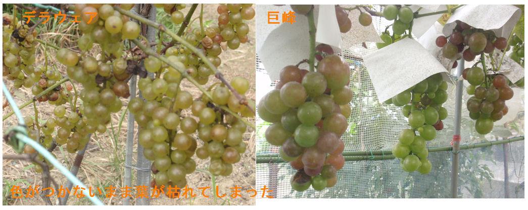 f:id:chuumeikun:20190915192128j:plain