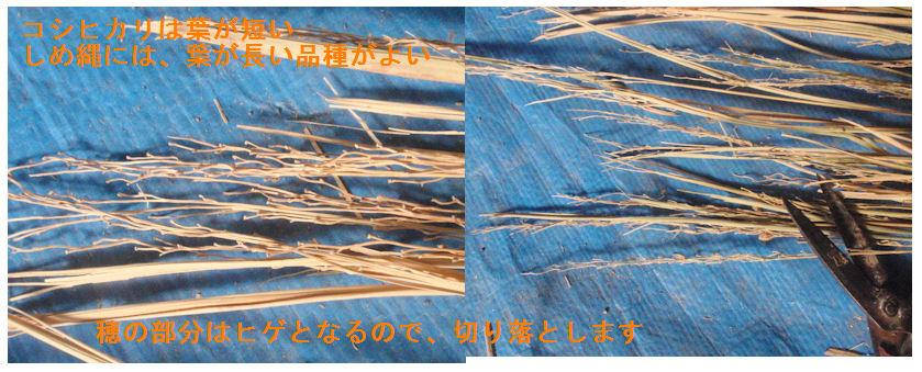 f:id:chuumeikun:20191130215146j:plain