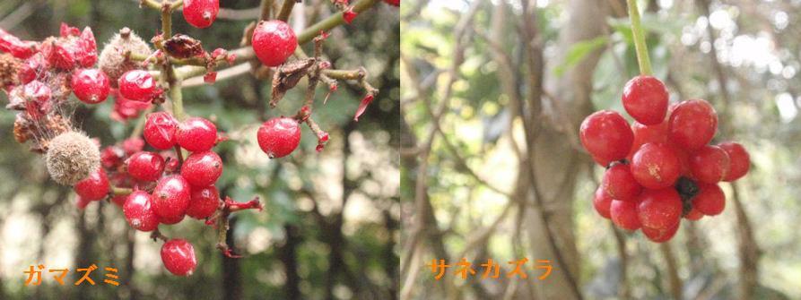 f:id:chuumeikun:20191215061032j:plain