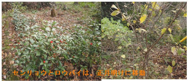 f:id:chuumeikun:20191217184257j:plain