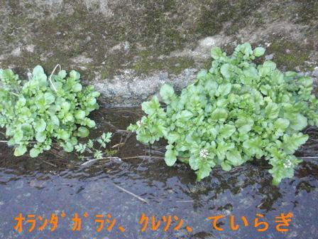 f:id:chuumeikun:20200104213226j:plain