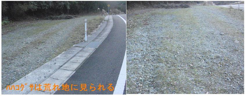 f:id:chuumeikun:20200104213623j:plain