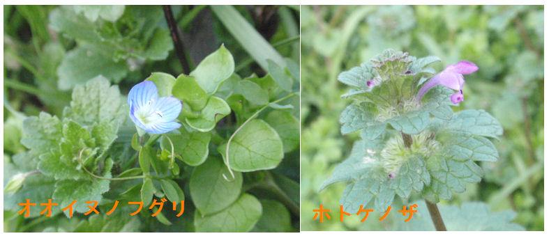f:id:chuumeikun:20200104214305j:plain