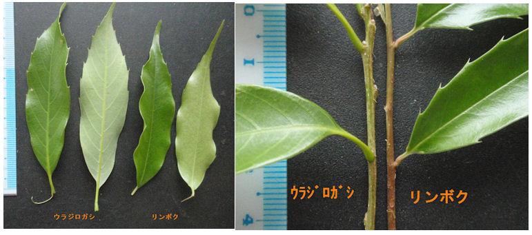 f:id:chuumeikun:20200109210505j:plain