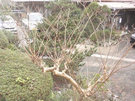 f:id:chuumeikun:20200125043314j:plain