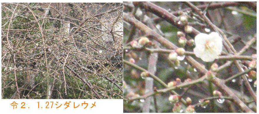 f:id:chuumeikun:20200128161707j:plain