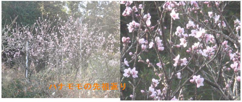 f:id:chuumeikun:20200325151355j:plain