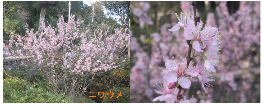 f:id:chuumeikun:20200325151416j:plain