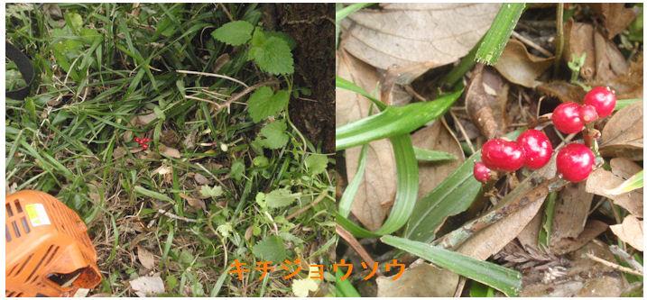 f:id:chuumeikun:20200326185125j:plain