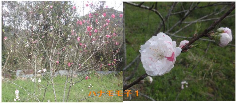 f:id:chuumeikun:20200330192759j:plain