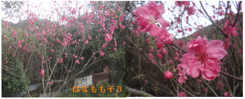 f:id:chuumeikun:20200330192838j:plain