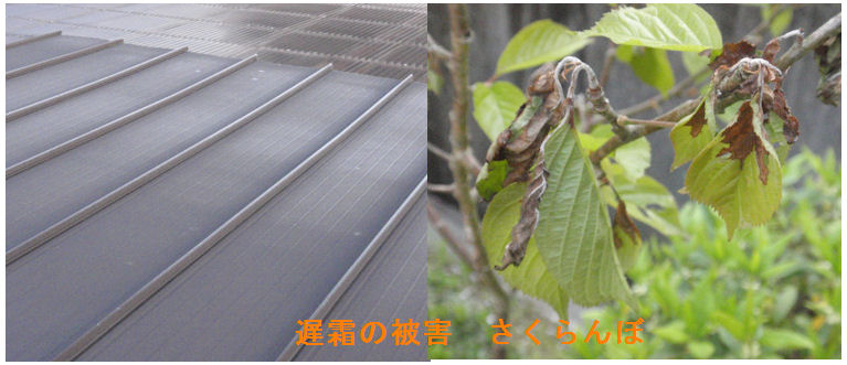 f:id:chuumeikun:20200407190239j:plain
