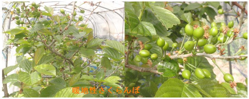 f:id:chuumeikun:20200407190353j:plain