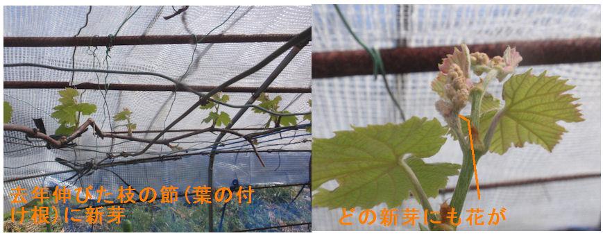 f:id:chuumeikun:20200430170610j:plain