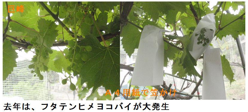 f:id:chuumeikun:20200612200213j:plain
