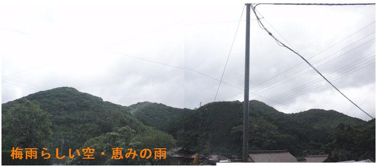 f:id:chuumeikun:20200613104545j:plain