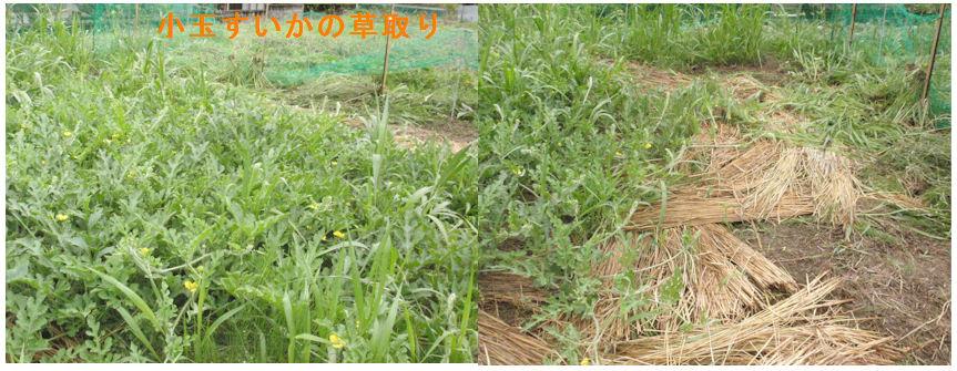 f:id:chuumeikun:20200614194908j:plain