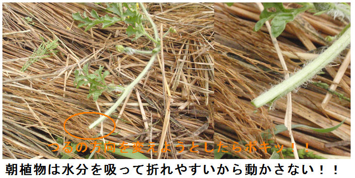 f:id:chuumeikun:20200614194935j:plain