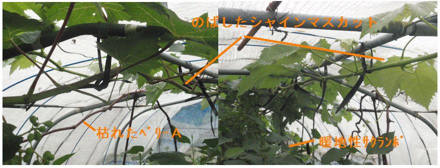 f:id:chuumeikun:20200614195309j:plain
