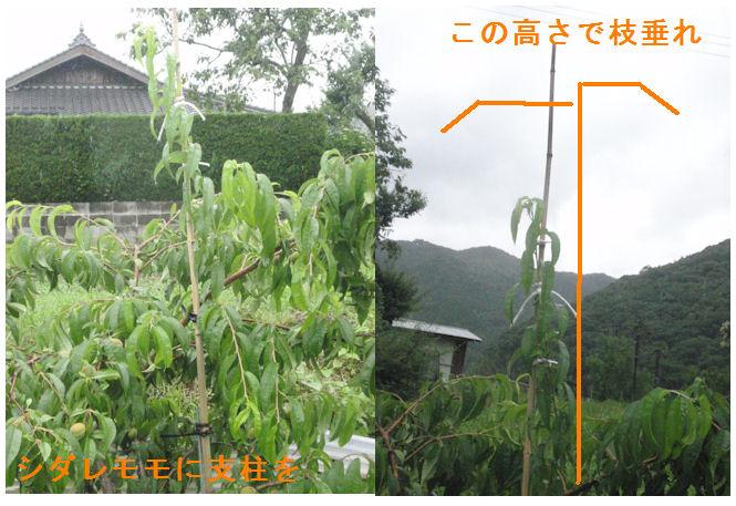 f:id:chuumeikun:20200614195540j:plain