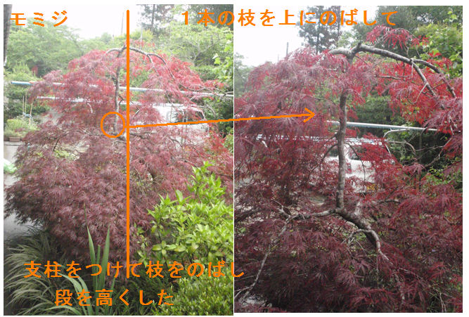 f:id:chuumeikun:20200614195705j:plain