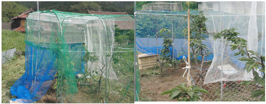 f:id:chuumeikun:20200616201111j:plain