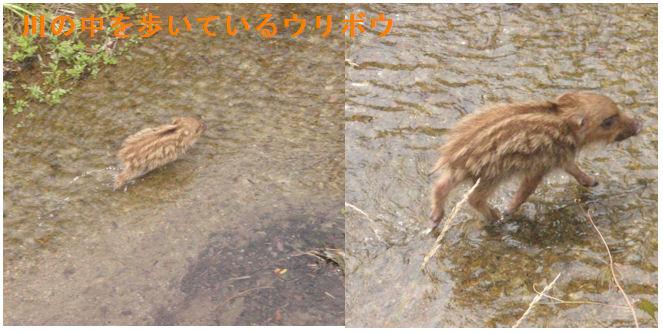f:id:chuumeikun:20200617191103j:plain