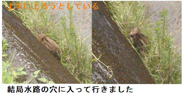 f:id:chuumeikun:20200617191118j:plain