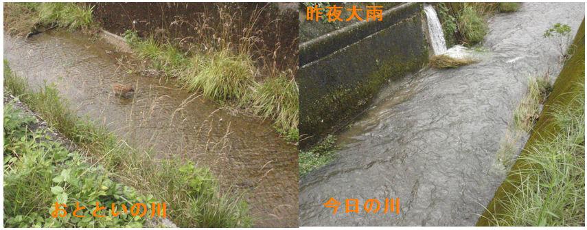 f:id:chuumeikun:20200619130136j:plain