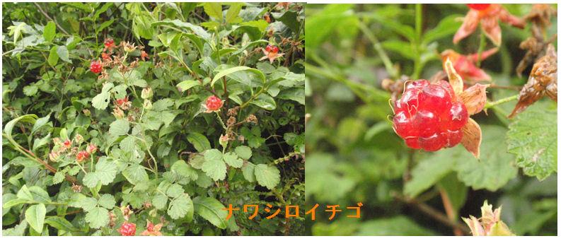 f:id:chuumeikun:20200619130311j:plain