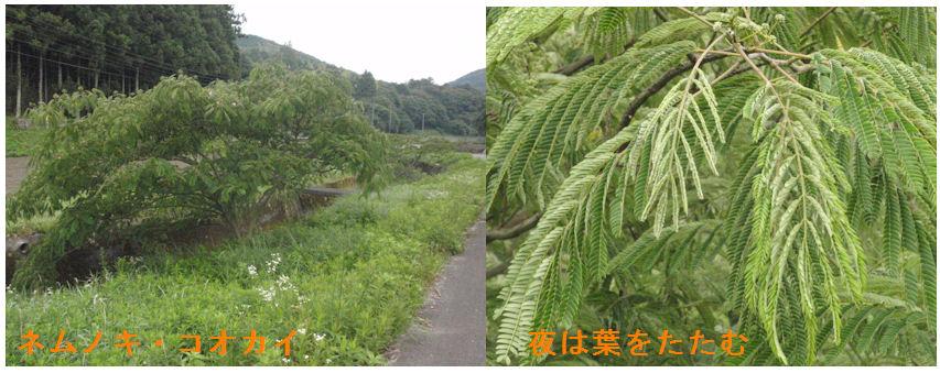 f:id:chuumeikun:20200619130359j:plain
