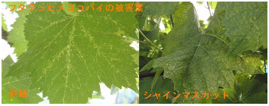 f:id:chuumeikun:20200621083149j:plain