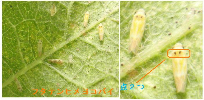 f:id:chuumeikun:20200621083250j:plain
