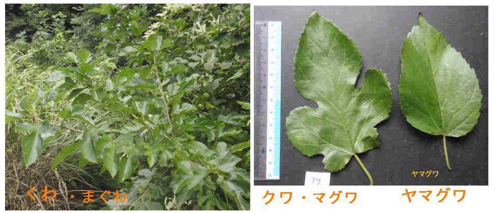 f:id:chuumeikun:20200625083025j:plain