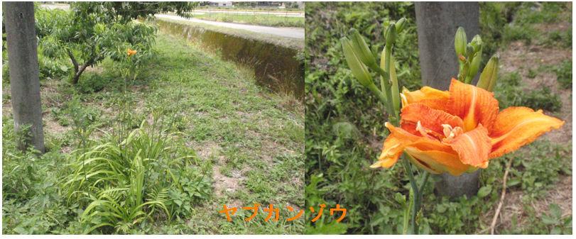 f:id:chuumeikun:20200627171010j:plain