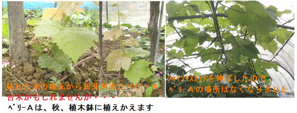 f:id:chuumeikun:20200704144951j:plain