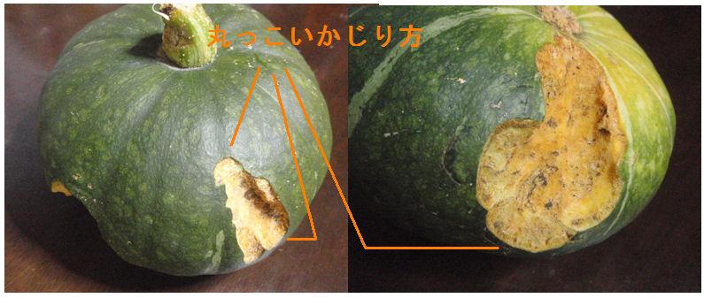 f:id:chuumeikun:20200727190312j:plain