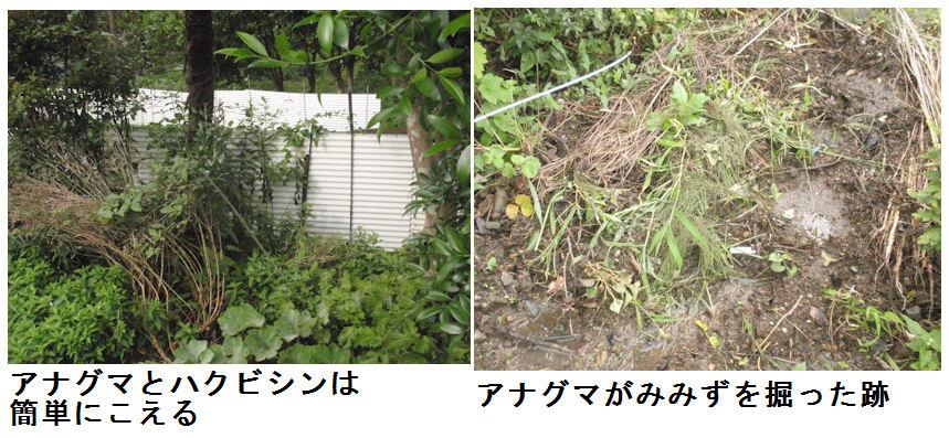 f:id:chuumeikun:20200727190448j:plain