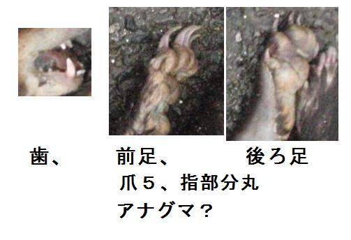 f:id:chuumeikun:20200727190934j:plain