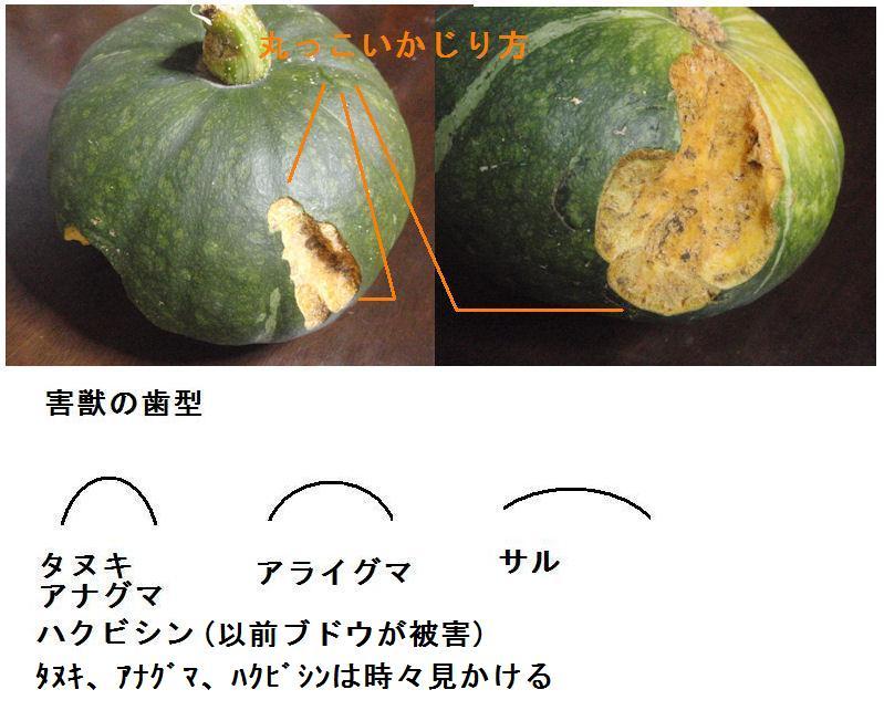 f:id:chuumeikun:20200727191104j:plain