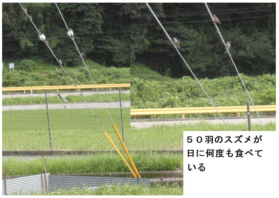 f:id:chuumeikun:20200813184721j:plain