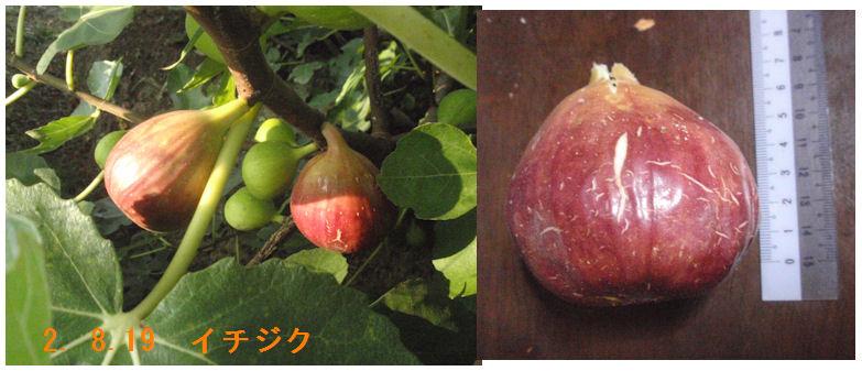 f:id:chuumeikun:20200819221141j:plain