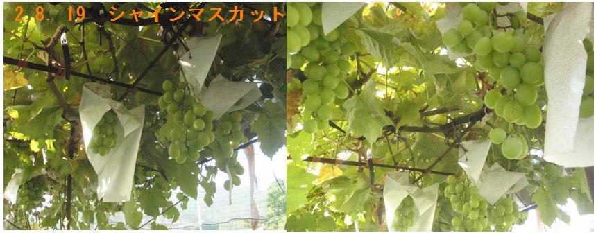 f:id:chuumeikun:20200819221313j:plain