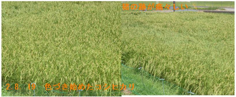 f:id:chuumeikun:20200819221444j:plain