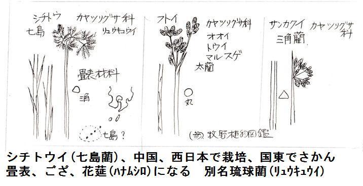 f:id:chuumeikun:20200909200011j:plain