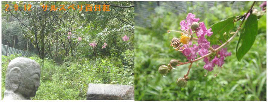 f:id:chuumeikun:20200912110747j:plain